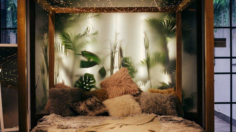 10 Best Indoor Plants for Home Decoration